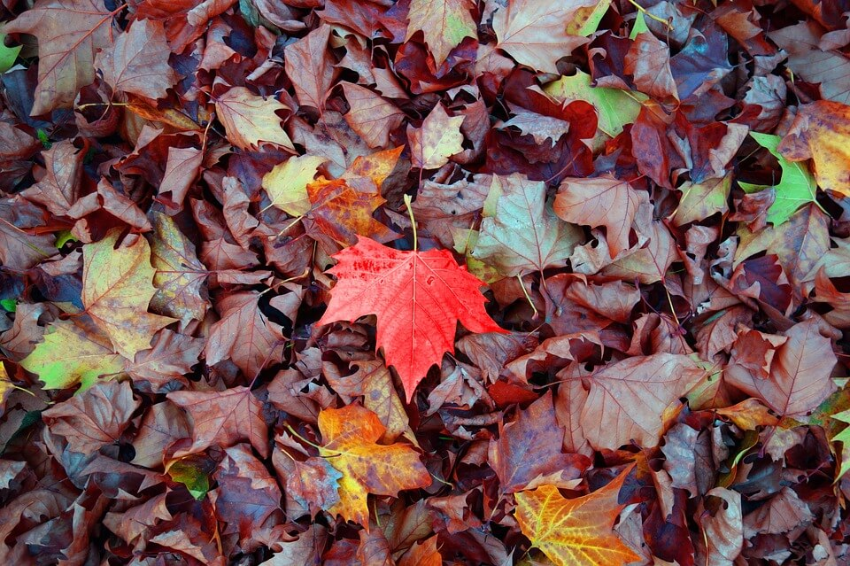 pile of leaves with one red leaf on top